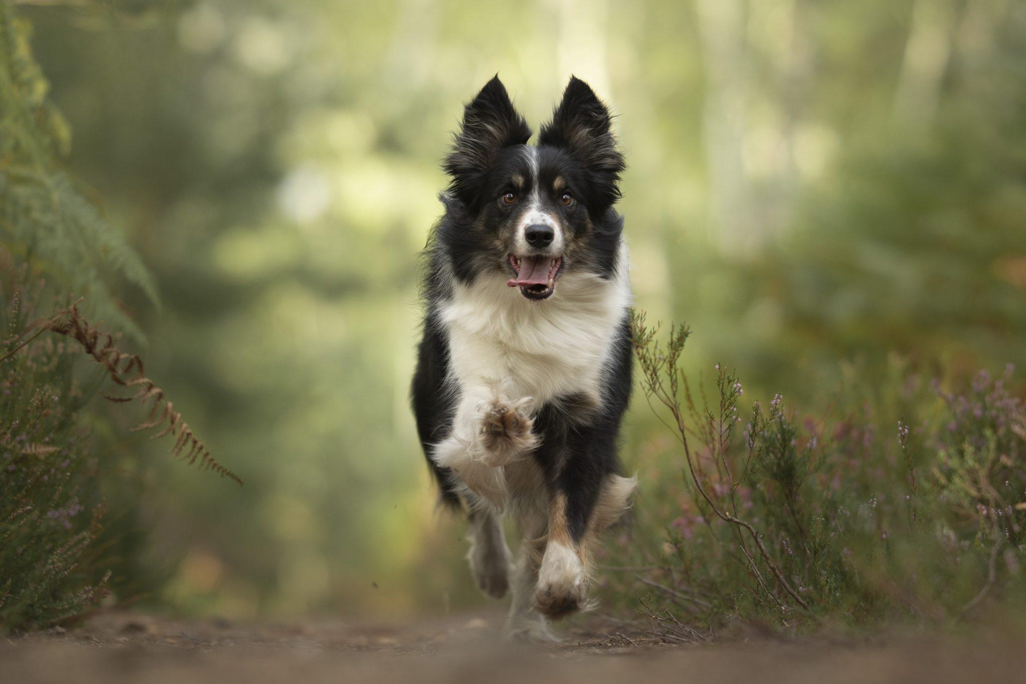 Chien course action photographe canin portrait cani look