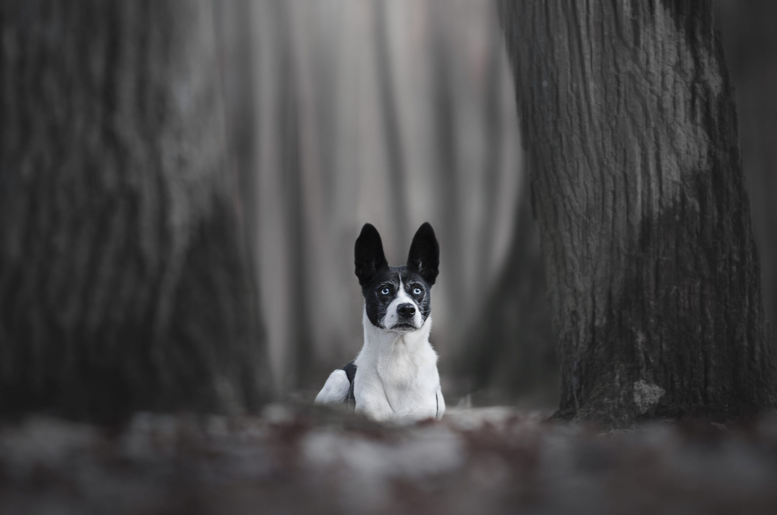 Chien border collie photographe canin cani look