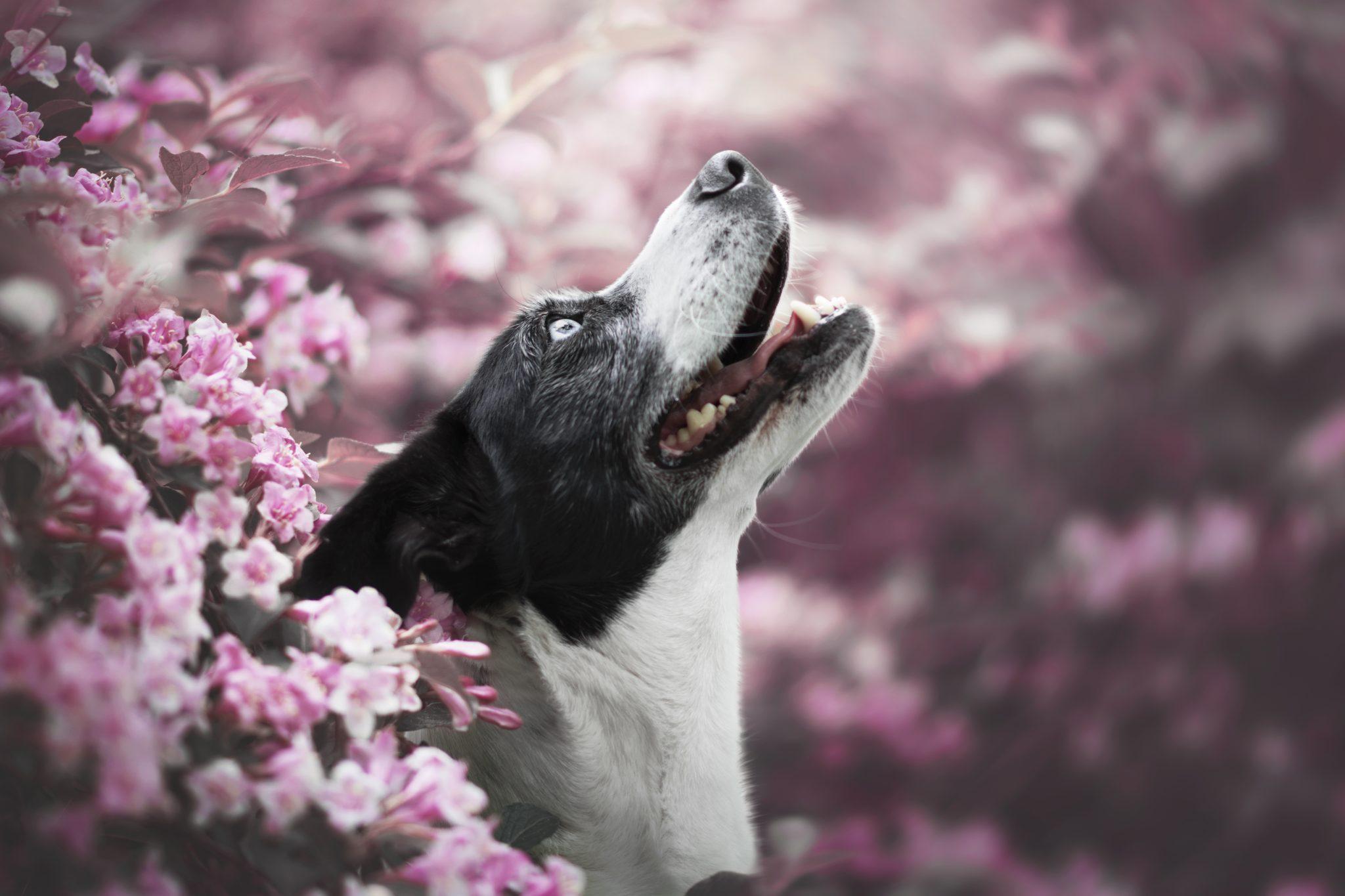 Chien photographe canin portrait cani look