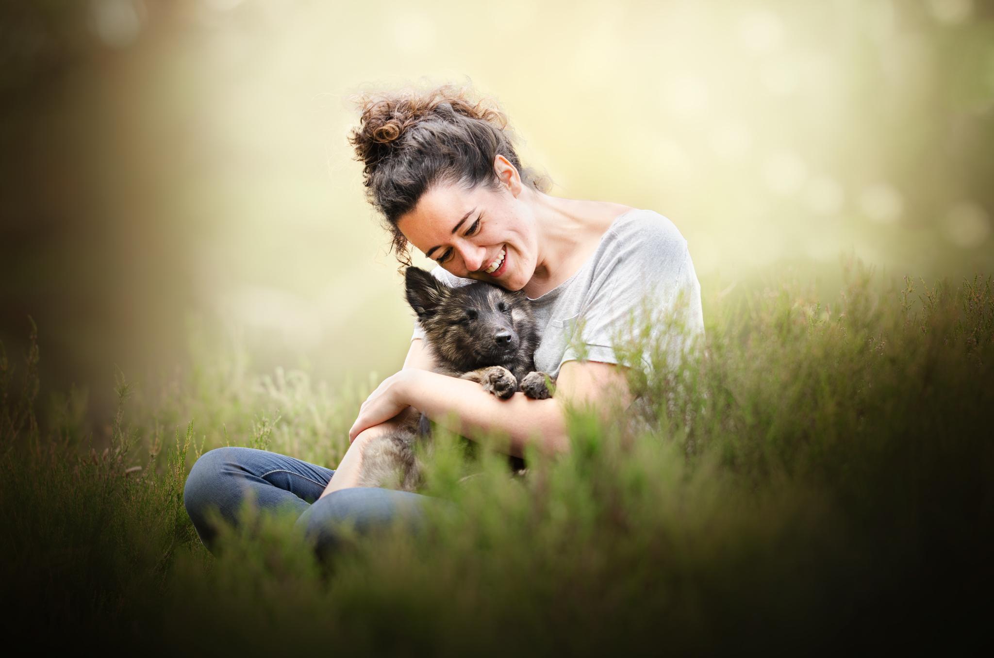 portrait chien canin photographe berger hollandais chiot